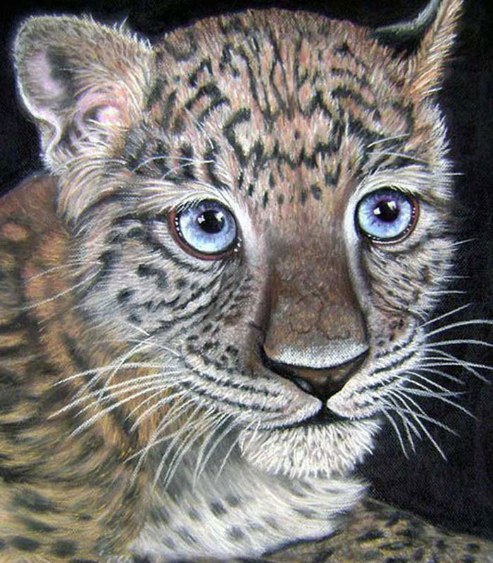 Wildcat Series